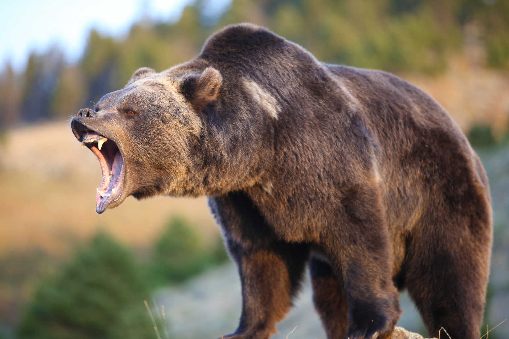 Guns or Spray: What's the Best Bear Deterrent?