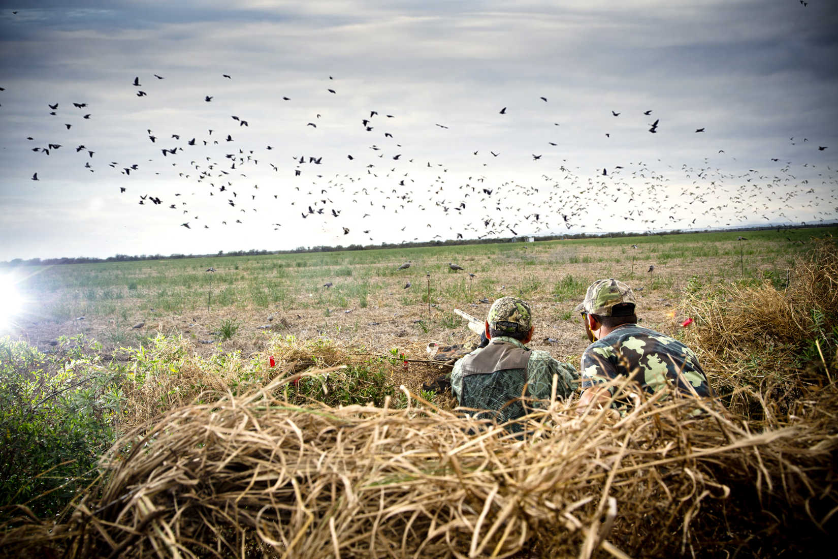 Dove Season Is Here: How to Find the Best Shell for Your Shotgun