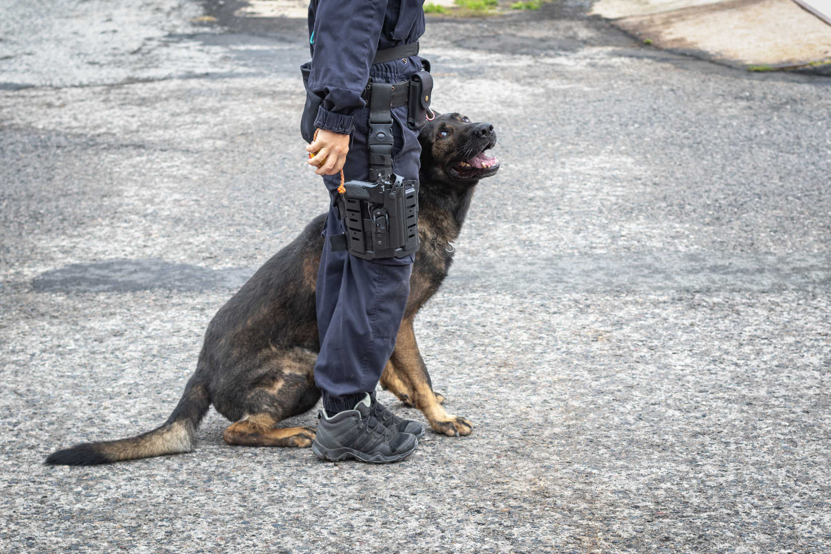 New Law Enforcement Trend: Gun Sniffing Dogs