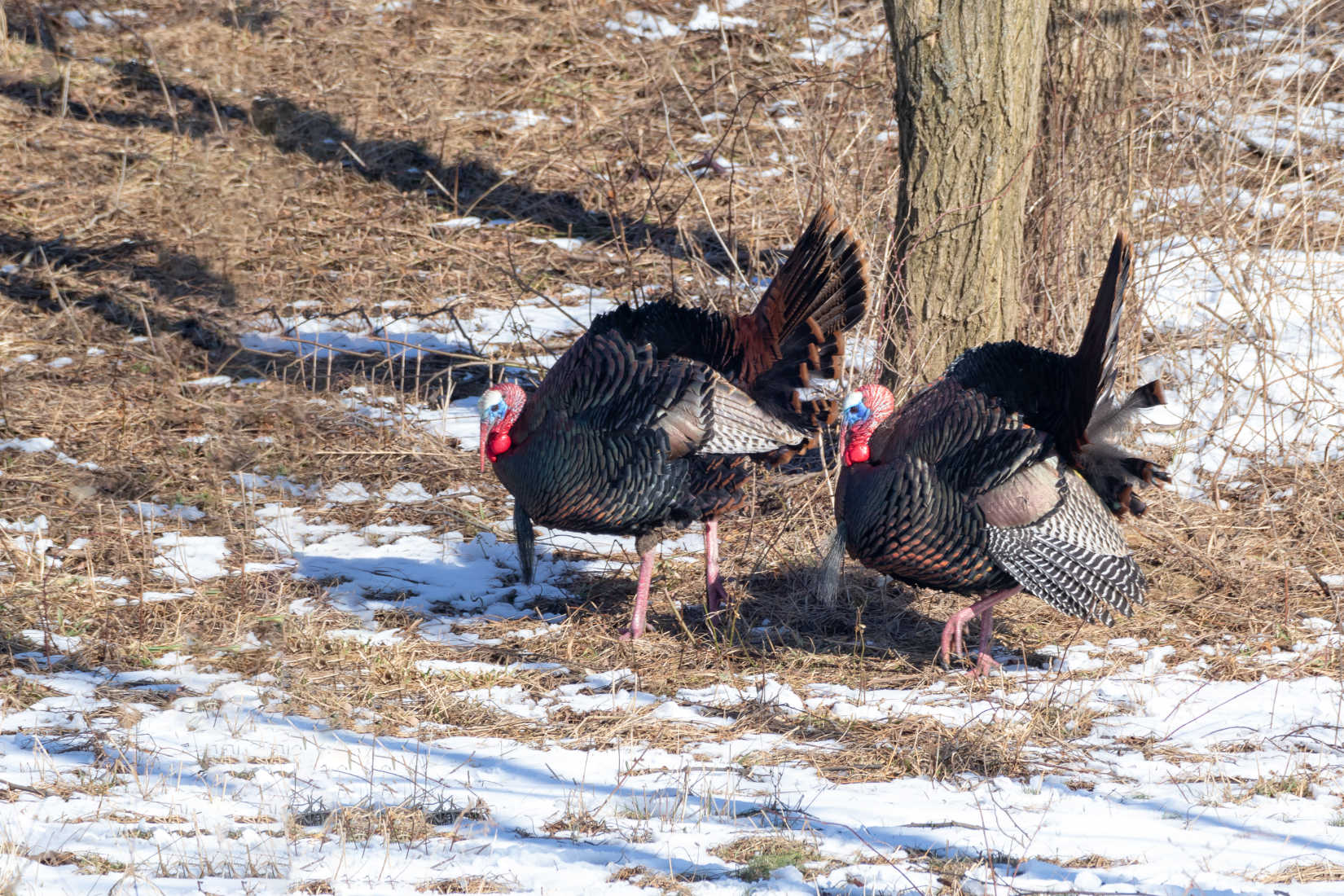 Turkey Time! Four Tips to Bag a Gobbler this Spring