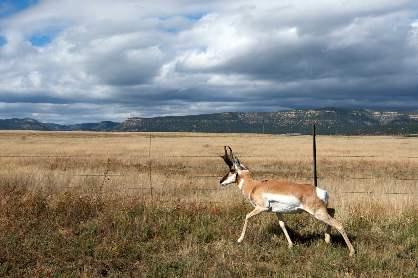 Wildlife: A Way of Life in the Rocky Mountain West